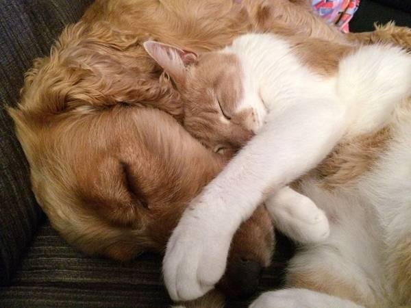 gato e cachorro dormindo pixabay