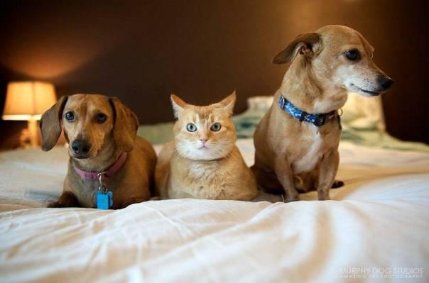 gato e cachorros na cama