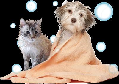 Hora do Banho cachorro gato pets