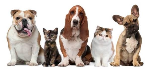 pets cachorro gato