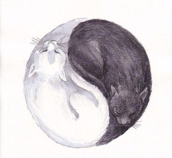 yin yang gatos.jpg