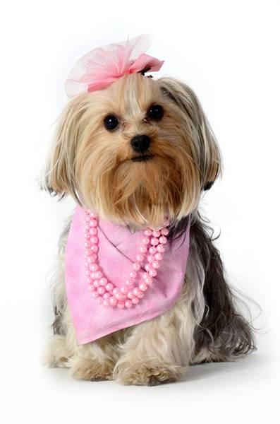 cachorra outubro rosa 1