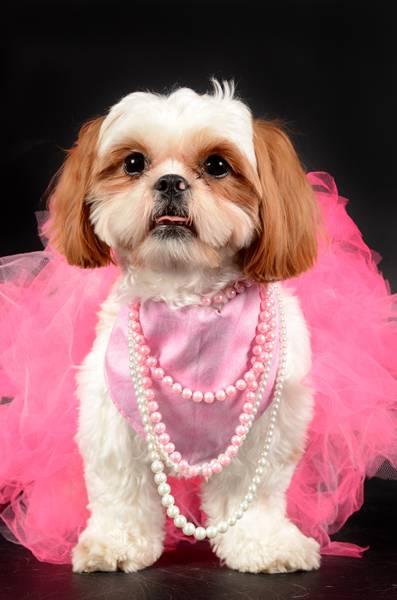 cachorra outubro rosa 2
