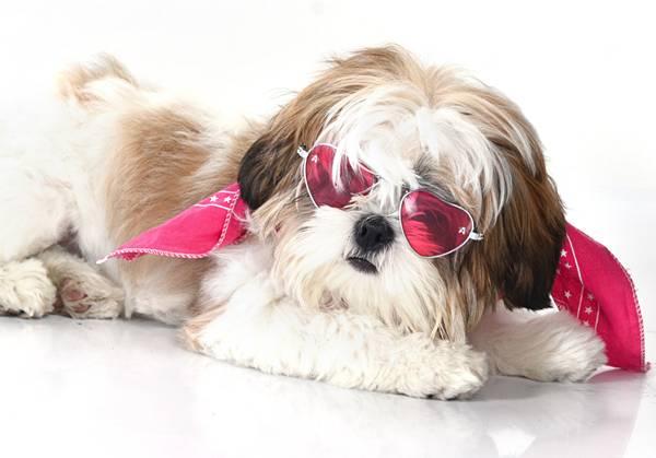 cachorra outubro rosa 4