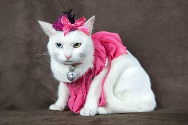 gata outubro rosa