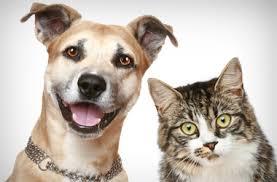 gato e cachorro adotar