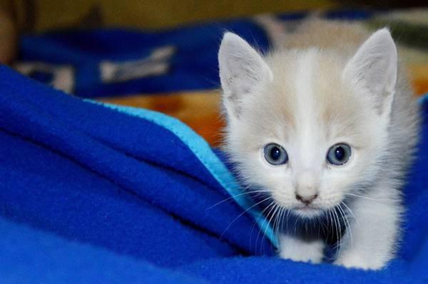 gato filhote pixabay