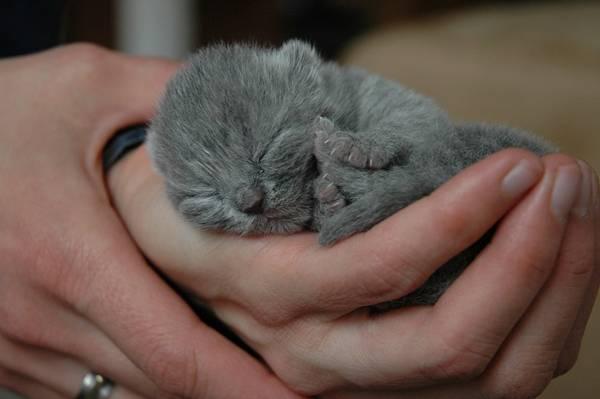 gato recem nascido rebel1965 pixabay