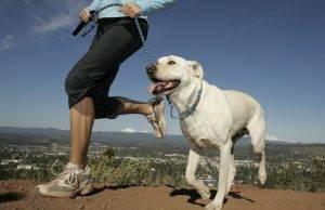 cachorro-passeando-300x194