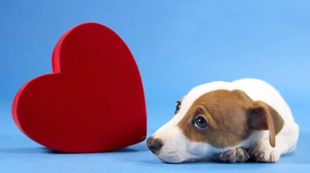 Cuidados com o coração do pet cachorro