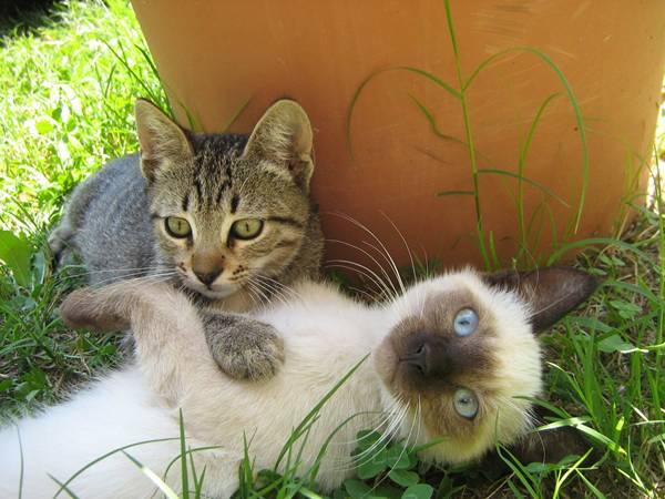 freepik gatos brincando
