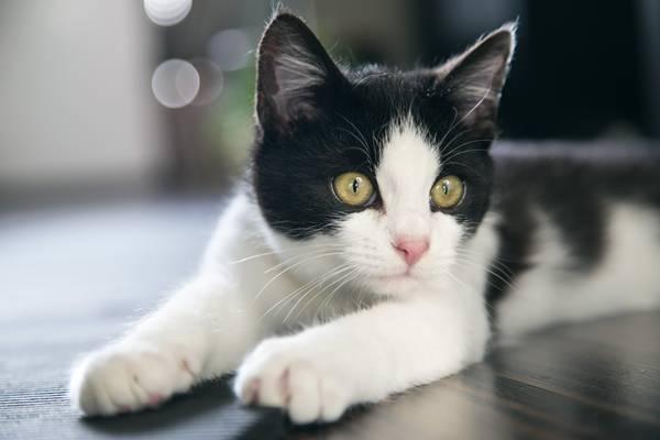 gato branco e preto.jpg