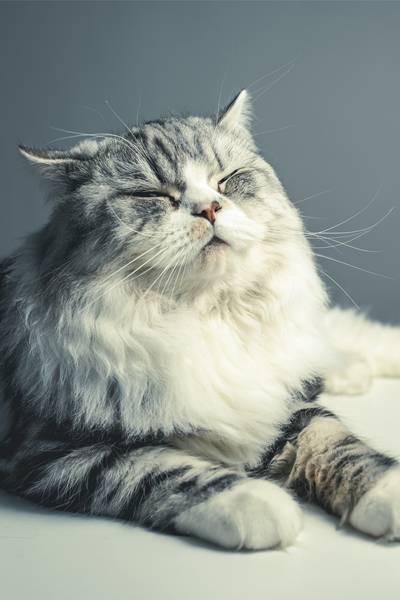 gato olhos fechados