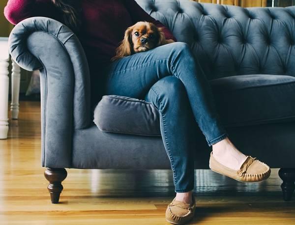 mulher cachorro sofá pixabay
