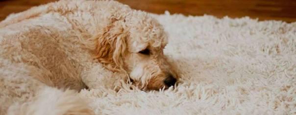 tapete cachorro personal clean