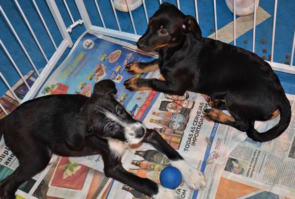 cachorrinhos adoção