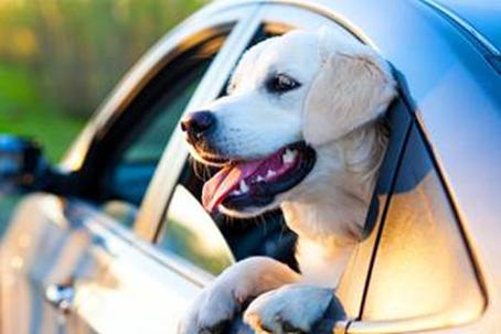 cachorro janela zoets