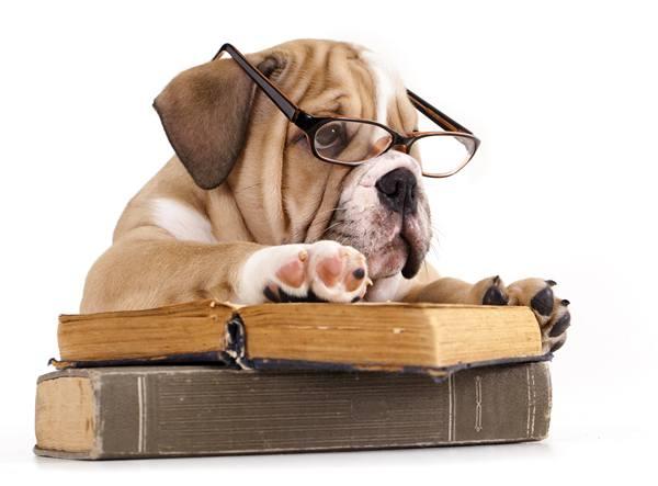 cachorro livro oculos.jpg