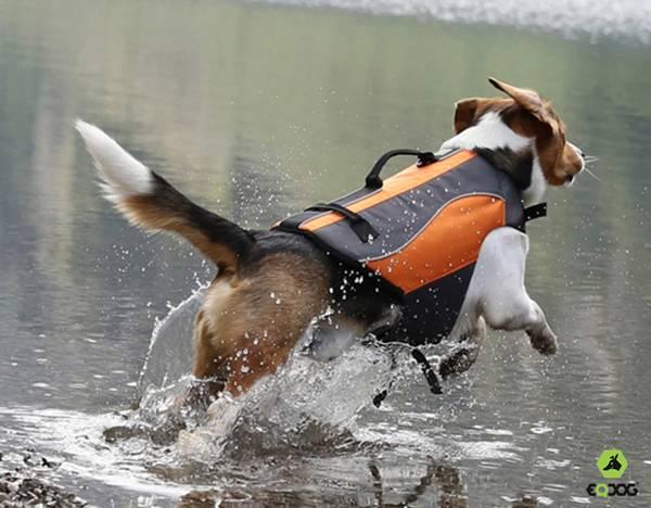 colete para cães