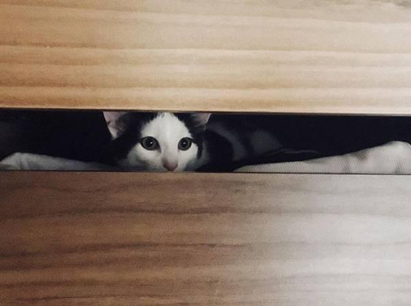gato assustado escondido pinterest