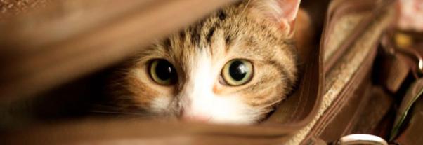 gato com medo.png