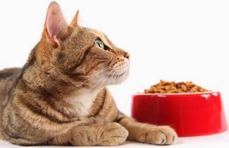 Gato e ração