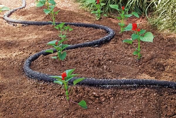 jardim irrigação