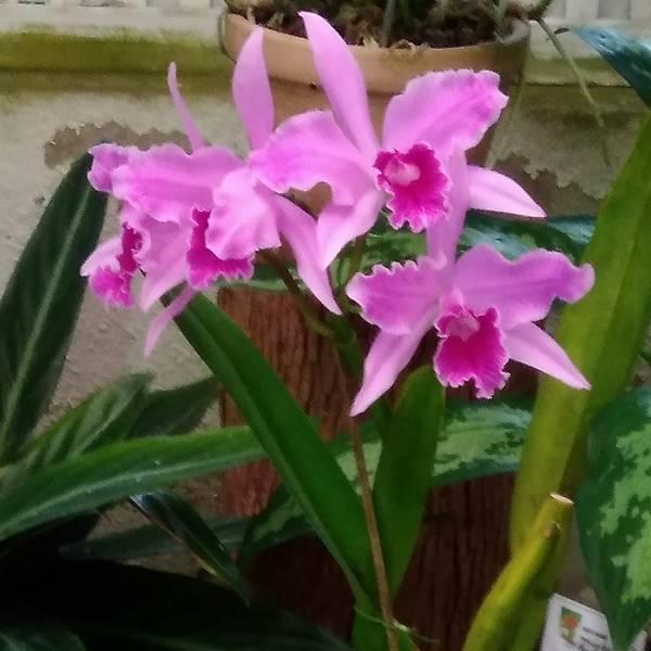 orquidea5