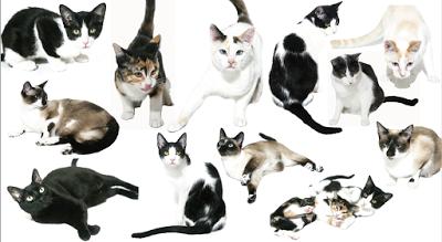 painel calendario gatos 2018