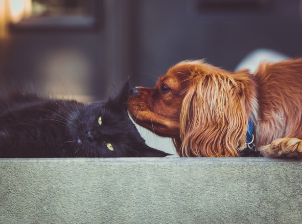 cachorro e gato preto