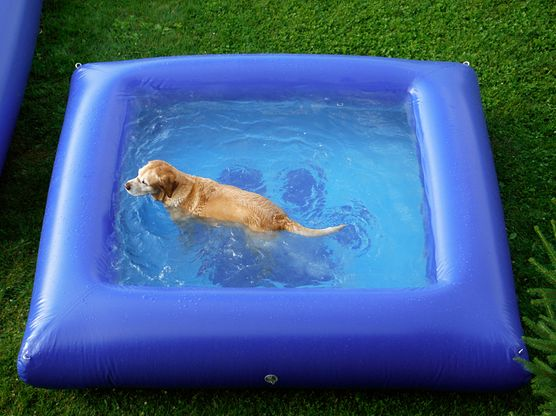 cachorro na piscina pinterest