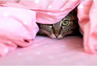 gato com medo cama