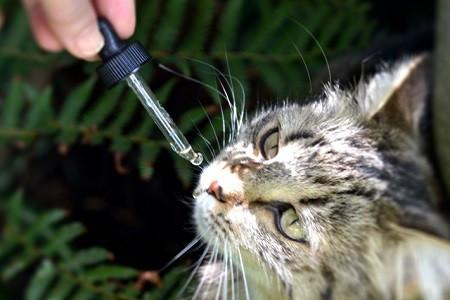 gato floral bach