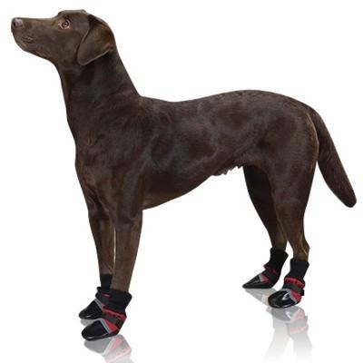 pose-de-cao-sapatos-pretos