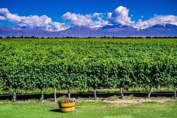 Trecho da rota do vinho em Mendoza com montanhas dos Andes ao fundo