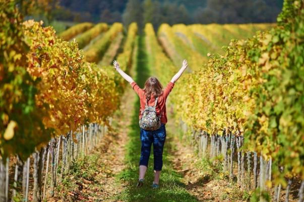 Turista passeia por vinícolas na região de Toscana
