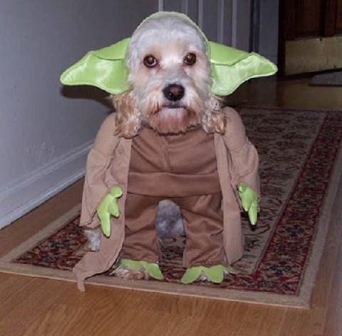 cachorro fantasia star wars