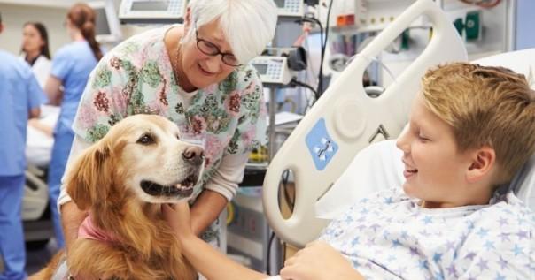 cachorro hospital visita foto wideopenpets
