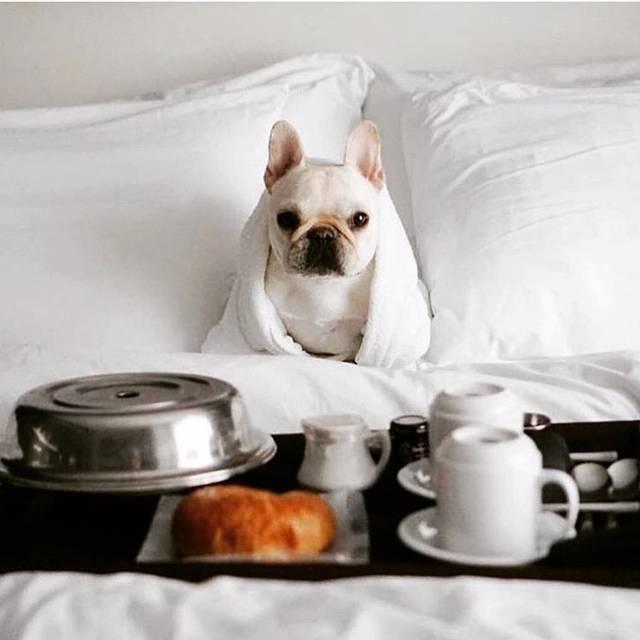 cachorro hotel pet friendly