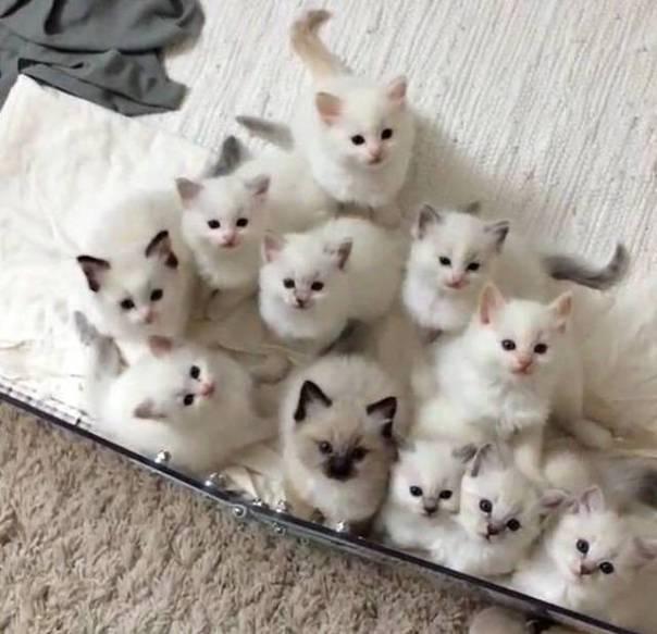 filhotes gatos brancos