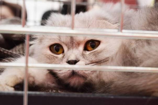 gato abrigo abandonado mimzy pixabay