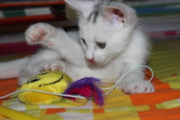 gato brinquedo pelucia pixabay