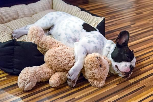 cachorro com ursinho brinquedo