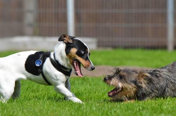 cachorros brincando.jpg