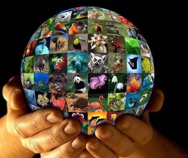 natureza globo vida silvestre animais