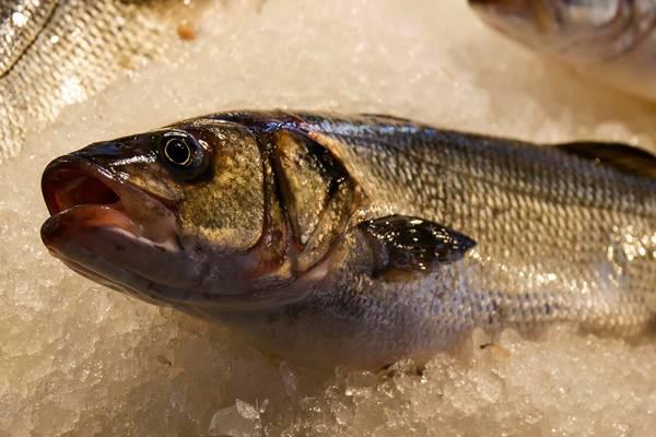 peixe olhos venda gillenger pixabay