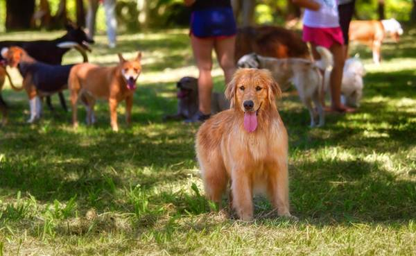 Um dia de cão Unahy - Foto Vanessa Sallesaro (1)