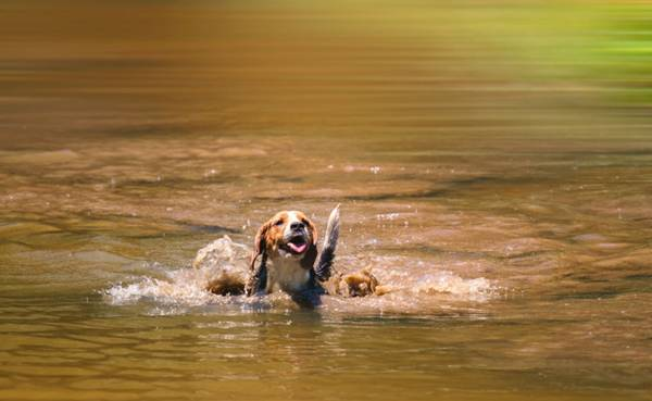 Um dia de cão Unahy - Foto Vanessa Sallesaro (2)