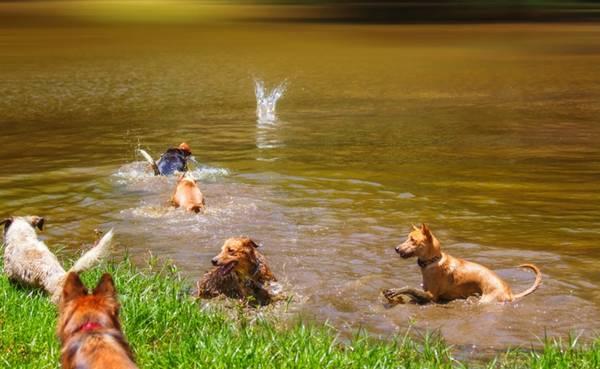 Um dia de cão Unahy - Foto Vanessa Sallesaro (3)