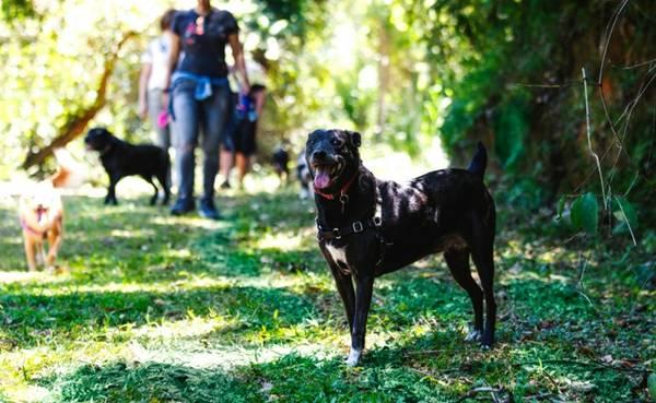Um dia de cão Unahy - Foto Vanessa Sallesaro (4)